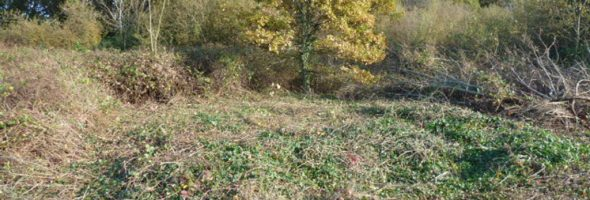 Official Launch of Peartree Green LNR