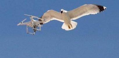 Alarming drones