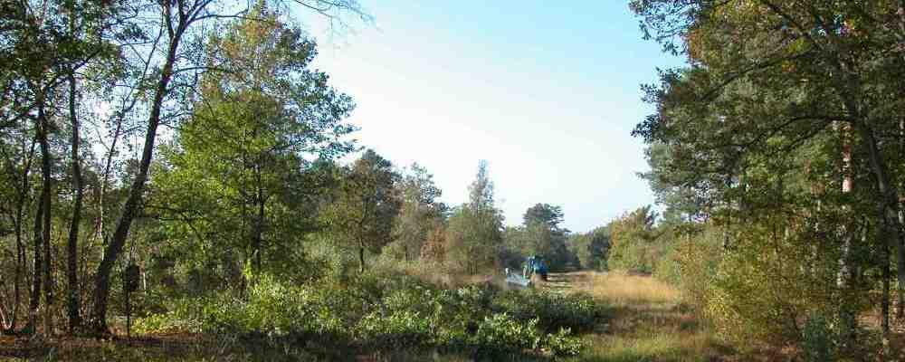 Botley Wood