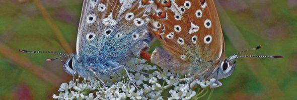 Bonking Butterflies Calendar