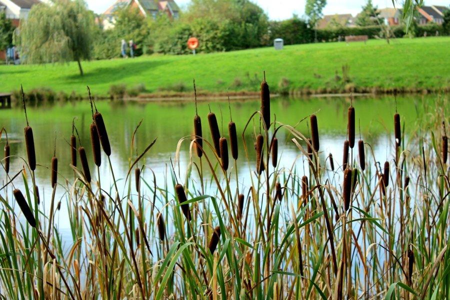 Wellstead Park